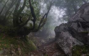 forest, sunrise, mist, landscape, moss, trees