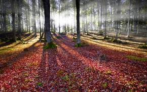 sun rays, leaves, fall, trees, moss, nature
