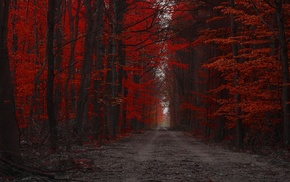 nature, red, fall, dirt road, forest, landscape
