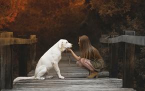 brunette, dog, girl, model, fall, wooden surface