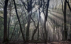 forest, trees, branch, nature, silhouette, sun rays