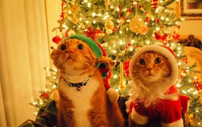 Christmas, fir, decorations, cat, costumes
