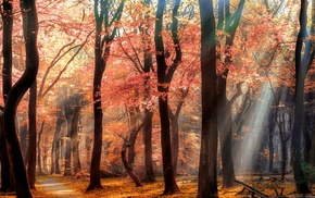 leaves, path, sun rays, flowers, sunlight, spring