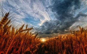 landscape, nature, field, clouds, sunset, wheat