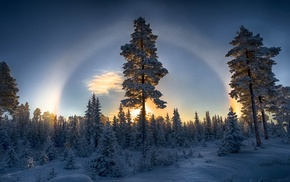 blue, winter, sunset, Halo, snow, forest