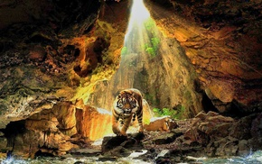 cave, nature, sunlight, tiger