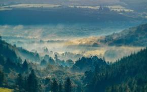 mountain, mist, nature, sunrise, forest