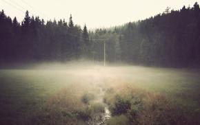 mist, wires, forest, field