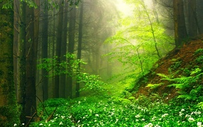 mist, ferns, trees, landscape, sunrise, forest