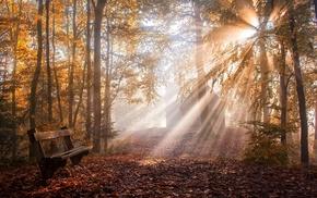 mist, leaves, sunlight, sun rays, fall, park