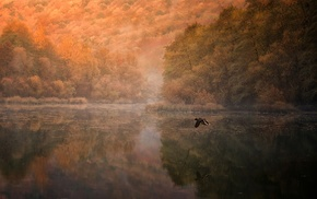 nature, morning, duck, birds, landscape, reflection