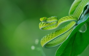 snake, depth of field, green, leaves, closeup, nature