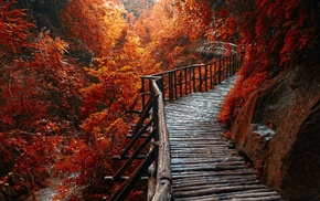 landscape, forest, trees, walkway, fall, river