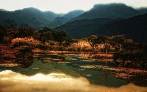 nature, trees, lake, reflection, shrubs, gold