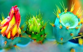 thorns, colorful, macro, closeup, flowers, nature