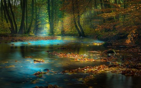 sun rays, forest, nature, river, leaves, sunlight