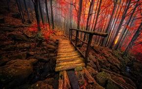 mist, landscape, Italy, nature, bridge, colorful