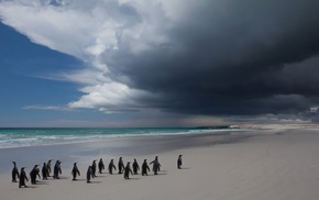 beach, sand, sea, horizon, Antarctica, penguins