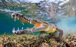 wildlife, fangs, underwater, muzzles, bubbles, fisheye lens