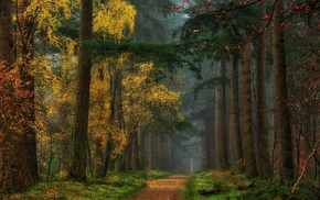 grass, path, colorful, fall, mist, forest