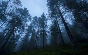 morning, mist, trees, grass, atmosphere, sunrise