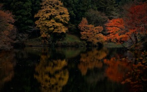 trees, water, reflection, landscape, colorful, forest