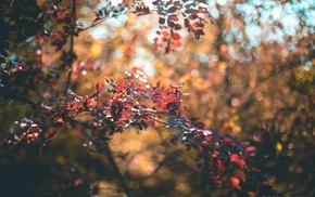 depth of field, bokeh, leaves, Crimea, nature