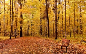 wood, leaves, branch, bench, forest, nature
