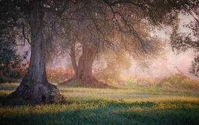 trees, grass, landscape, mist, shrubs, sunrise