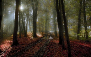 sunlight, landscape, leaves, path, nature, tracks