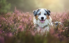 animals, nature, depth of field, flowers, field, dog