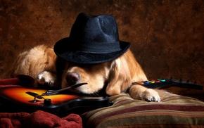 hat, golden retrievers, animals, Guitar Hero, dog, video games