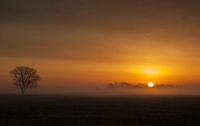 Sun, nature, morning, horizon, sky, forest