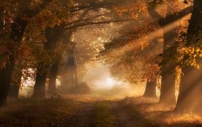 fall, path, dirt road, sun rays, leaves, sunrise
