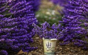 purple flowers, flowers, depth of field, photography, lavender, bucket