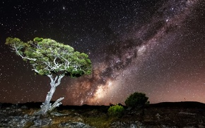 nature, long exposure, Milky Way, stars, trees, hill