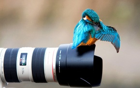 camera, animals, kingfisher, nature, Canon, colibri bird