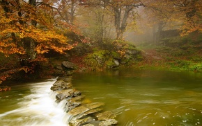 nature, forest, river, landscape, stones, trees
