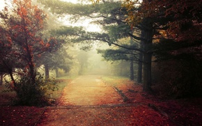 daylight, landscape, trees, fall, mist, morning
