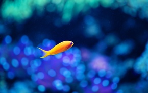 underwater, yellow, blue, nature, fish, alone