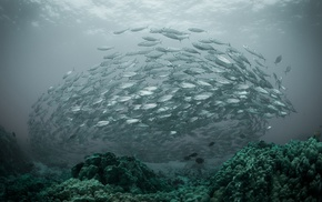 coral, nature, underwater, sea, fish, water