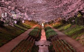 Yokohama, garden, Japan, cherry blossom