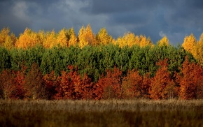 nature, Lithuania, trees, forest