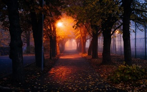 nature, street light, mist, morning, leaves, lights