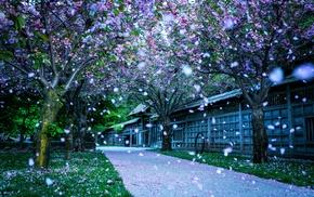 Blossom, grass, flowers, park, spring, trees