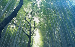 forest, leaves, nature, bamboo, trees, sunlight