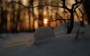 branch, depth of field, landscape, snow, winter, trees