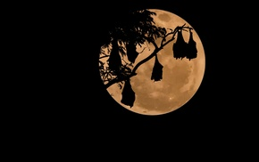 moon, bats, night, simple background