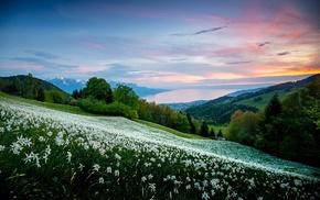trees, white flowers, field, sea, shrubs, sunrise