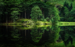 green, grass, water, trees, reflection, landscape